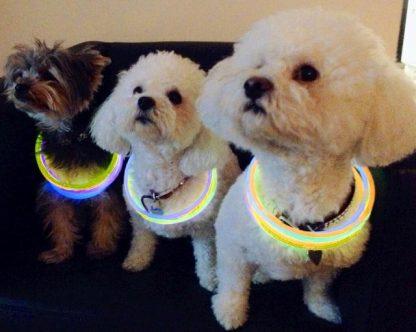 Glow sticks on dog